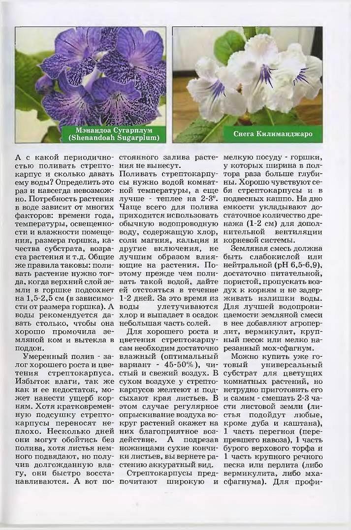 стрептокарпус уход и размножения 7